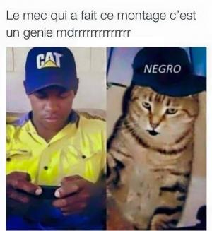 Quand les chats se vengent!!